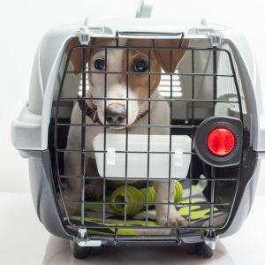 Cum să călătorești în siguranță cu animalele de companie